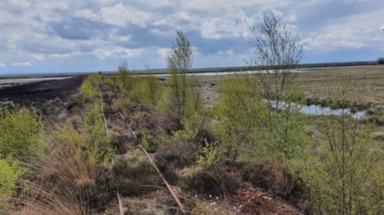 Alte Schienen laufen zwischen kleinen Bäumen und Feldern mit Wasser.