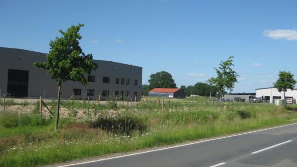 Hinter einer Straße stehen in unterschiedlicher Größe Gebäude und Hallen in einem Gewerbegebiet.
